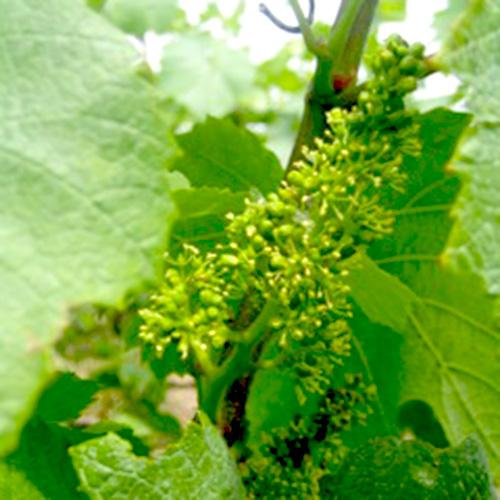 Wein--und-Champagnerberatung